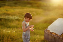 Boy with chicken. In a field at sunset little boy in jeans playing with chicken Royalty Free Stock Photos