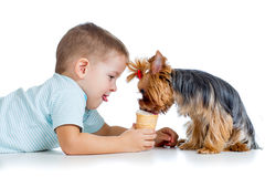 Boy child feeding dog  on white background Royalty Free Stock Photos