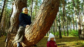 Boy child have planted on tall pine. The boy is very happy that sits on a high tree in the park. Sunday holiday with. Children in the park. Sunny autumn day stock video footage