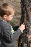 Boy chipping bark Stock Image