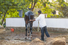 Boy cleaning the horse with water Stock Photos