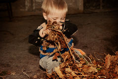 The boy cleans autumn dry leaves Stock Photo