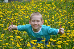 The boy on a clearing from dandelions Stock Images