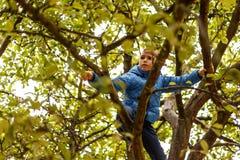 Boy climbing apple tree Stock Image