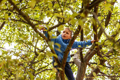 Boy climbing apple tree Stock Photography