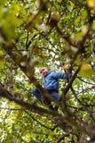 Boy climbing apple tree Royalty Free Stock Photo