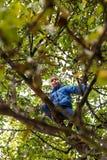 Boy climbing apple tree Stock Photo