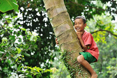 Boy Climbing a Tree stock photography