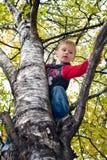 Boy climbing tree royalty free stock photos