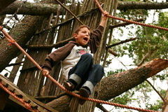 Boy climbing tree Royalty Free Stock Image