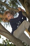 Boy Climbing in Tree. Boy (7) having second thoughts about his tree climbing action Stock Photography