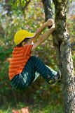 Boy climbing in a tree. Boy with yellow cap climbing in a tree Royalty Free Stock Images