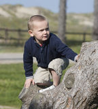 Boy climbing tree Royalty Free Stock Images