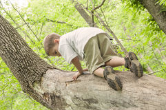 Boy climbing tree Stock Photo