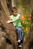 Boy climbing in trees Stock Photography