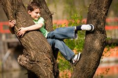 Boy climbing in trees Royalty Free Stock Image