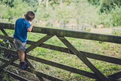 Boy climbing the wooden gates in Banstead Woods stock photos