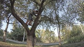 A boy climbs on branches of a tree. In park stock video