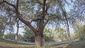 A boy climbs on branches of a tree. In park stock footage