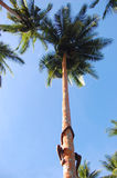 Boy climbs at palm tree Stock Photo