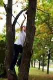 Boy climbs a tree. The boy climbs a tree Royalty Free Stock Images