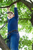 Boy climbs on a tree. Brave boy hanging on a tree and ready to pounce Stock Photos