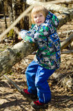 A boy climbs on a tree. In the spring forest Royalty Free Stock Photography