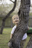 Boy Climbs Tree Royalty Free Stock Images