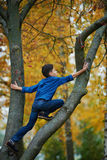 Boy climbs up the tree in park. Boy climbs up the tree in autumn park Royalty Free Stock Image