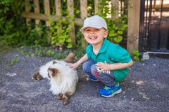 Boy close encounters with a cat. Portrait of a happy little boy stroking cat fur on the farm stock images