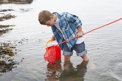 Boy collecting shells stock photos