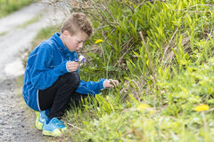 Boy collecting wild flowers Royalty Free Stock Images