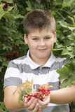 Boy collects berries of viburnum in the garden Royalty Free Stock Photo