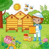 Boy collects honey. Stock Photography