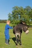 Boy combing the donkey Stock Photo