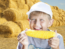 Boy with corn royalty free stock image