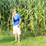 Boy in corn field Royalty Free Stock Image