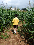 Boy in corn maze Royalty Free Stock Images