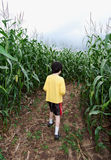 Boy in corn maze Stock Photography