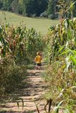 Boy in a corn maze. Little boy running through a corn maze royalty free stock photo