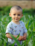 Boy in cornfield Stock Photo