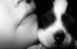 Boy cuddling puppy. A black and white photo of a young boy and a small puppy cheek to cheek having a cuddle Stock Photo