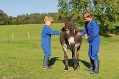 Boy curry the donkey Royalty Free Stock Photos