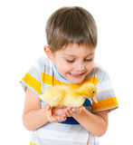 Boy with cute chickens Stock Photo