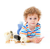 Boy with cute chickens Royalty Free Stock Image