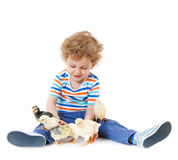 Boy with cute chickens Royalty Free Stock Photography