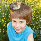 Boy cute with chiken on his head Royalty Free Stock Images