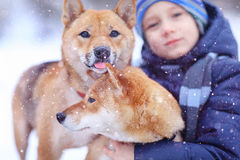 Boy and  cute dog on winter walking Royalty Free Stock Image
