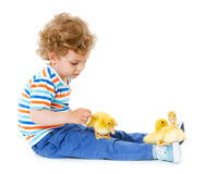 Boy with cute ducklings Royalty Free Stock Photo