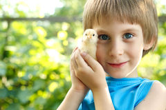 Boy cute hugs chiken in hand nature summer outdoor Royalty Free Stock Photos